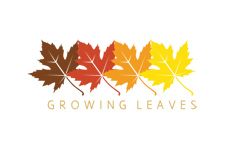 Red Maple Leaf Logo
